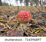 Small Fly Agaric In The Forest...