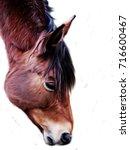 illustration of brown horse...   Shutterstock . vector #716600467