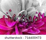 photo manipulation of flower in ...   Shutterstock . vector #716600473