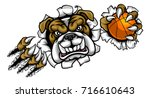 a bulldog angry animal sports...   Shutterstock .eps vector #716610643