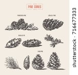 set of pine cones  design... | Shutterstock .eps vector #716677333