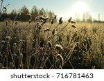 frozen flowers and grass  lit... | Shutterstock . vector #716781463