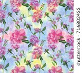 watercolor. flowers and buds of ... | Shutterstock . vector #716802433