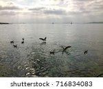 sea and seagulls   Shutterstock . vector #716834083