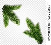collection of fir branches. set ...