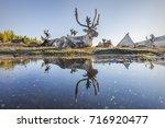 mongolian reindeer reflecting... | Shutterstock . vector #716920477