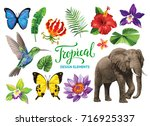 Tropical collection: exotic flowers, leaves, birds, butterflies and animals. Vector isolated elements on the white background.