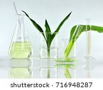 natural organic botany and... | Shutterstock . vector #716948287