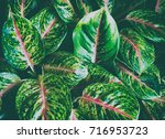 natural leaves green leaf... | Shutterstock . vector #716953723