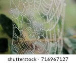 spider web with morning dew... | Shutterstock . vector #716967127