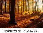 autumn forest illuminated by... | Shutterstock . vector #717067957
