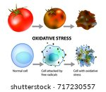 oxidative stress and cellular... | Shutterstock .eps vector #717230557