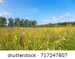 glade and a lot of meadow... | Shutterstock . vector #717247807