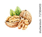 watercolor walnuts isolated.... | Shutterstock . vector #717304453