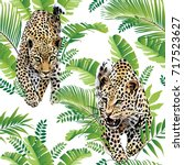 leopards palm leaves tropical... | Shutterstock .eps vector #717523627