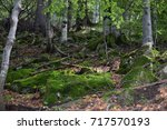 Small photo of Forest edge