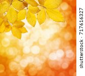 autumn leaves on the sun and... | Shutterstock . vector #717616327