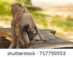 two monkeys sitting grooming... | Shutterstock . vector #717750553