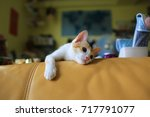 lazy small cat on the sofa | Shutterstock . vector #717791077