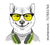 dog in glasses and headphones.... | Shutterstock .eps vector #717831763