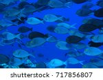 Small photo of Elogate surgeonfish (Acanthurus mata) underwater in the tropical waters of the Maldives
