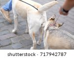 Small photo of Pets get acquainted on a city street on a walk with the owners