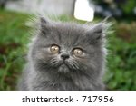 kitten in front - stock photo