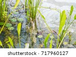 Small photo of Image of wastewater pond with scum on top of water from eutrophication.
