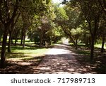 dirt road surrounded by trees  | Shutterstock . vector #717989713