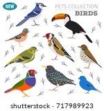 pet birds collection   breeds... | Shutterstock .eps vector #717989923