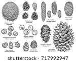 pine and fir cone collection ... | Shutterstock .eps vector #717992947