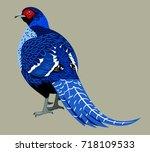 dark blue decorative pheasant | Shutterstock .eps vector #718109533