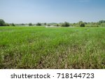 Small photo of Field of rice in the West African country The Gambia, Africa
