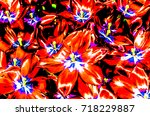 colorful floral pattern... | Shutterstock . vector #718229887