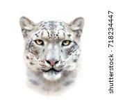 snow leopard face on white... | Shutterstock . vector #718234447