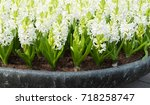 close up of white fresh... | Shutterstock . vector #718258747