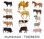 Set Of Farm Animals   Bulls ...