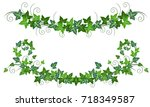 ivy vines  hedera helix .... | Shutterstock .eps vector #718349587