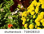 nature | Shutterstock . vector #718428313
