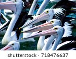 A Group Of Pelicans Waiting To...