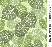 green palm leaves silhouette.... | Shutterstock .eps vector #718599787