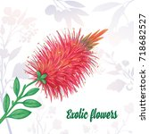 exotic plants. callistemon... | Shutterstock .eps vector #718682527