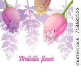 exotic flower. medinilla.... | Shutterstock .eps vector #718682533