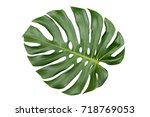 monstera leaf isolated on white ... | Shutterstock . vector #718769053