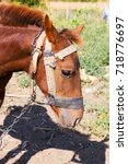 Small photo of Portrait of a brown foal, was covered with flies, rural landscape. Muzzle of a foal. Brown foal. Small horse.