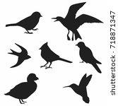 Stock vector bird silhouette vector collection of bird silhouettes 718871347