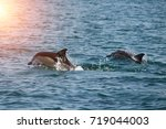 a flock of wild dolphins swim... | Shutterstock . vector #719044003