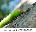large green caterpillar | Shutterstock . vector #719108203