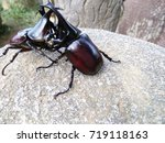 dynastinae   insects in film... | Shutterstock . vector #719118163