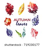 autumn leaves. watercolor. hand ... | Shutterstock .eps vector #719230177
